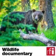Pochette_Documentaire-Animalier-EN_HD.jpg