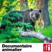 Pochette_Documentaire-Animalier_HD.jpg